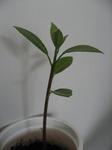 avocado0306071104.jpg