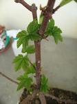 bonsai2007.jpg