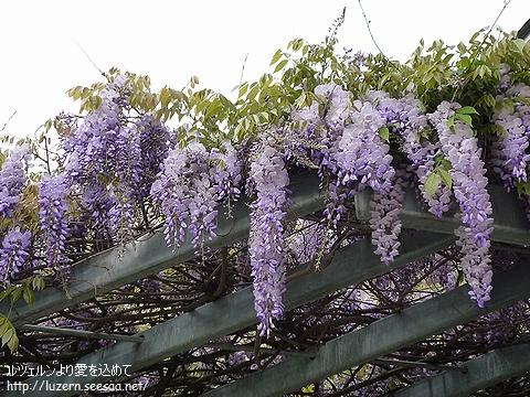 fuji0705101406.jpg
