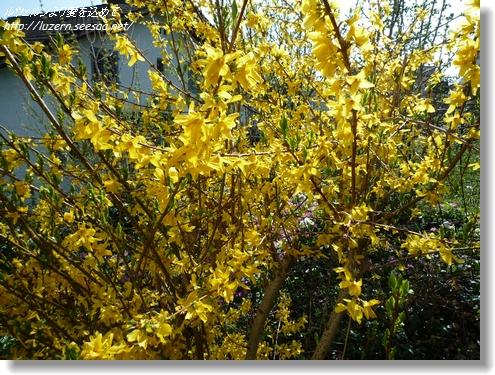 gardening0204121542.jpg