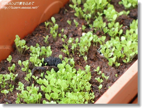 gardening1504120857.jpg