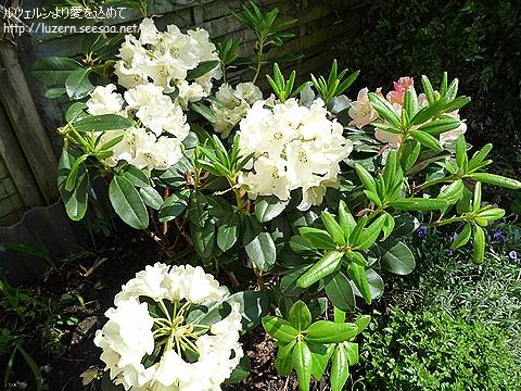 gardening1804111301.jpg