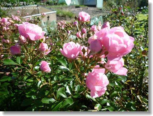gardening1910121242.jpg