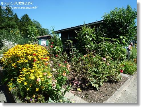 kitchengarden1708121515.jpg