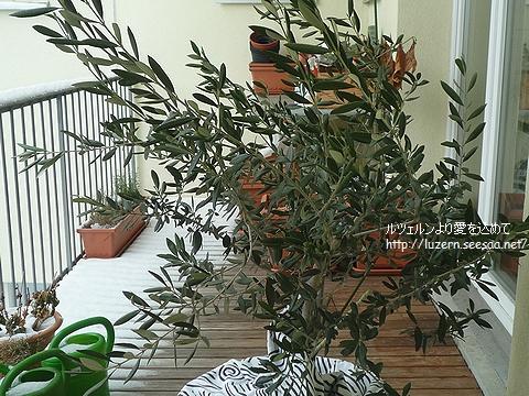olive1102101154.jpg