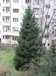 weihnachtsbaum3.jpg