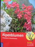 Alpenbluemen.jpg