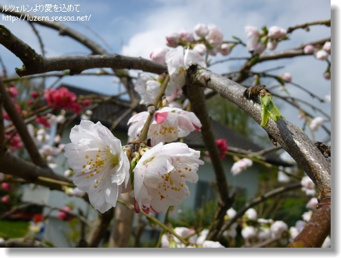 baikautugi2304131112b.jpg
