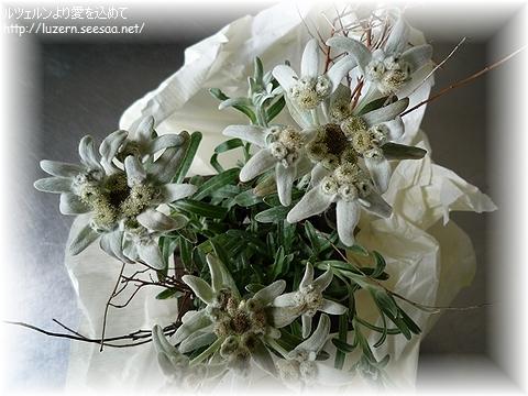 edelweiss1505121722.jpg