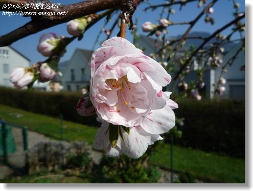 gardening0204121544.jpg