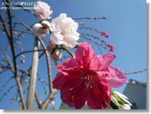 gardening0204121545.jpg