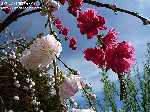 gardening0504111155.jpg