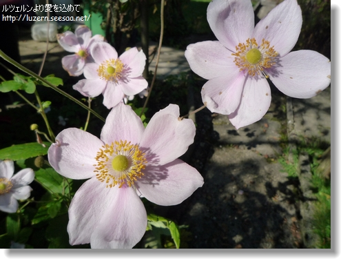 gardening1910121252.jpg