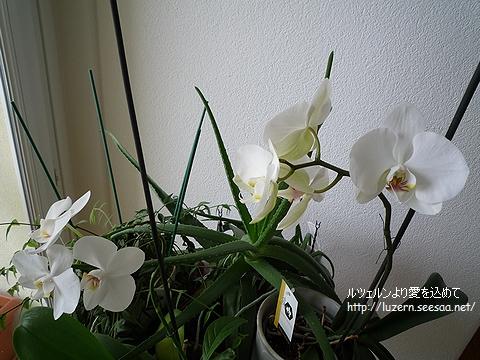 orchideen1102101155.jpg