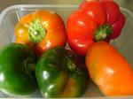 tomatenpaprika1609081720.jpg
