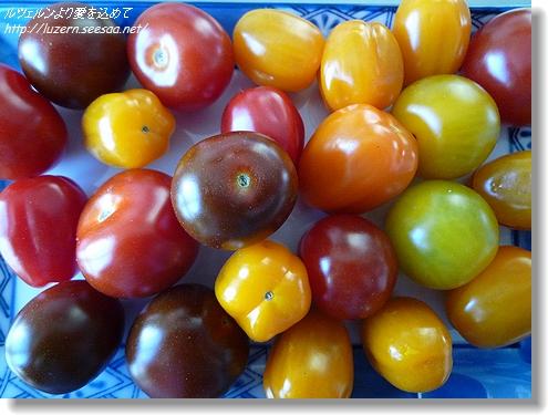 tomatoes3103121112.jpg