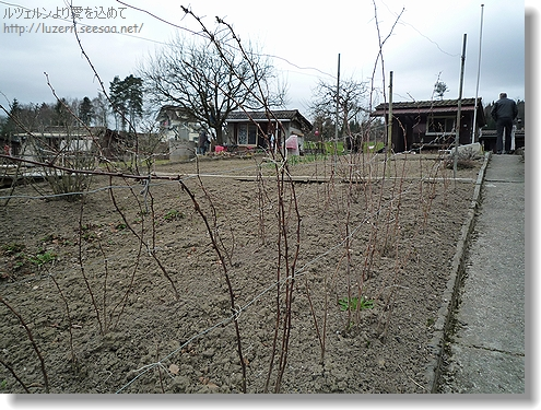 gardening1803121326a.jpg